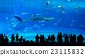 Whale shark in Okinawa Churaumi Aquarium 23115832