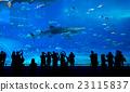 Whale shark in Okinawa Churaumi Aquarium 23115837