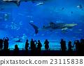 Japan Okinawa aquarium 23115838