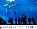 Japan Okinawa aquarium 23115841