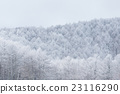 Trees with snow forest 23116290
