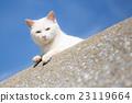 貓 小貓 動物 23119664