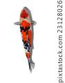 锦鲤 鲤鱼 鱼 23128026