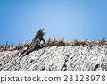爬行動物 綠鬣蜥 爬蟲類的 23128978
