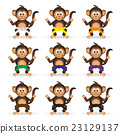 chimpanzee set with karate training color belts  23129137