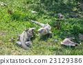 綠鬣蜥 動物 鬣蜥蜴 23129386