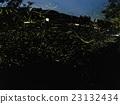 firefly, night, nights 23132434