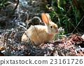 兔 兔子 兔子島 23161726