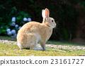 兔 兔子 兔子島 23161727