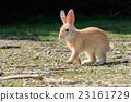 兔 兔子 兔子島 23161729