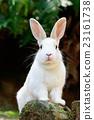 兔 兔子 兔子島 23161738