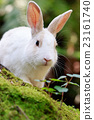 兔 兔子 兔子島 23161740