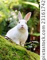 兔 兔子 兔子島 23161742