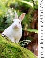 兔 兔子 兔子島 23161745