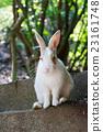 兔 兔子 兔子島 23161748