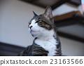 แมว,หน้าเสีย,สัตว์เลี้ยง 23163566