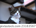 แมว,หน้าเสีย,สัตว์เลี้ยง 23163567