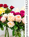 colorful roses 23168422
