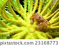 卡特彼勒螃蟹 23168773