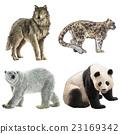 动物 北极熊 熊猫 23169342