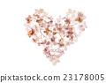 dry hydrangea 23178005