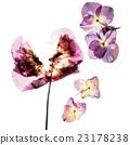 pressed flowers 23178238