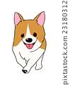 狗 狗狗 威爾士矮腳狗 23180312