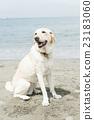 狗 狗狗 坐下 23183060