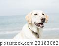 狗 狗狗 大型狗 23183062
