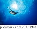 水生的 水下 在水中 23183944