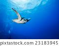 水生的 水下 在水中 23183945