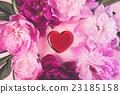 nice flowers 23185158
