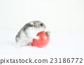 倉鼠 西紅柿 番茄 23186772
