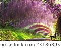 등나무, 터널, 등나무 선반 23186895