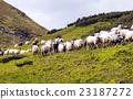 羊 绵羊 牧羊人 23187272