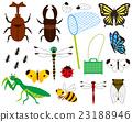 昆蟲採集 夏 夏天 23188946