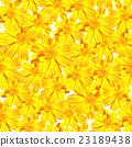 seamless floral pattern of yellow cosmos flower 23189438