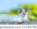 猫 动物 小猫 23189796