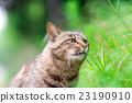 貓 哺乳動物 動物 23190910