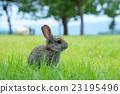 兔子 兔 兔子島 23195496