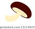 lentinula, shiitake, shiitake mushroom 23214624