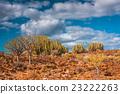 Cactus Desert Sunset in Tenerife Canary Island 23222263