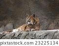 哺乳动物 肉食动物 野生生物 23225134