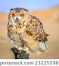 Desert Eagle Owl 23225598