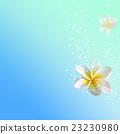 물속 프르 23230980