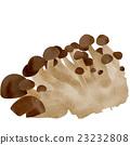 蟹味菇 蘑菇 白底 23232808