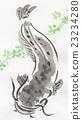 鯰魚 淡水魚 魚 23234280