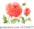 花朵 花 花卉 23234677