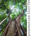 森林 樹林 淺 23237704
