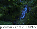 firefly, water fall, lightning bug 23238977